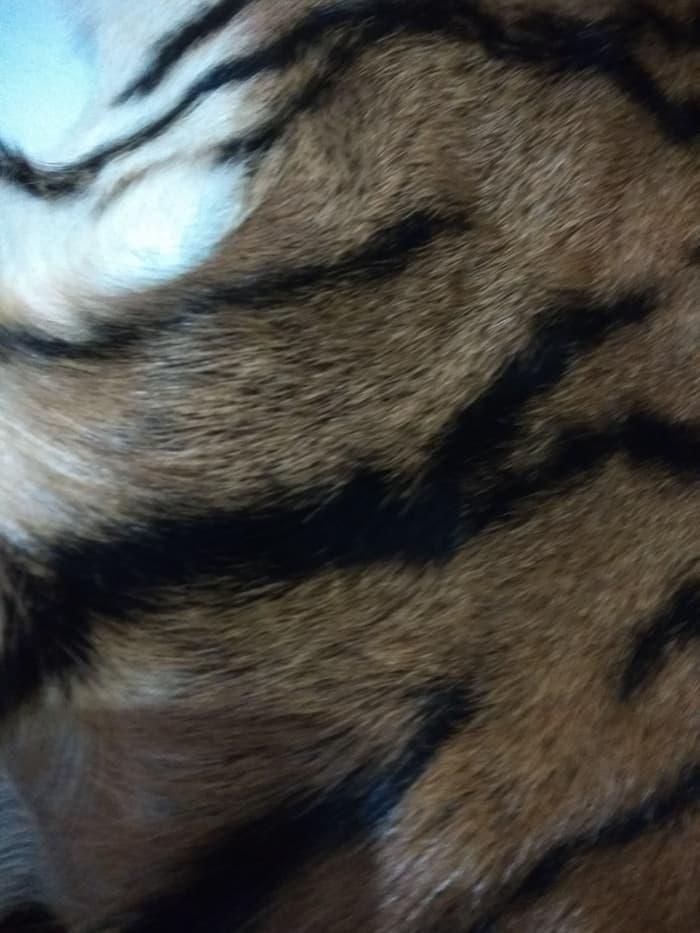 model kulit harimau