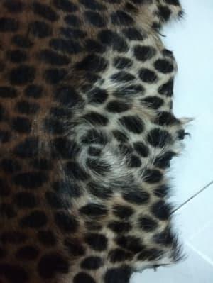 grosir kulit macan tutul
