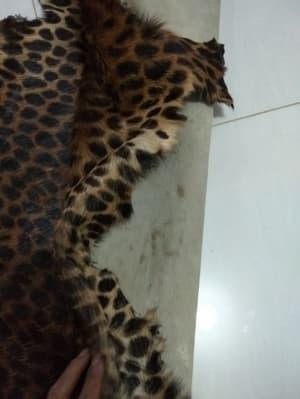 harga kulit macan tutul